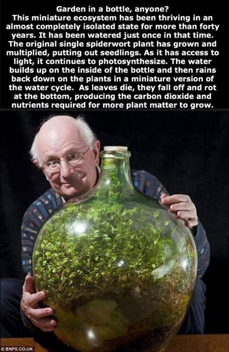 ecosystem-bottle