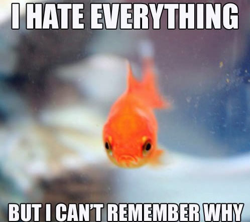 fish-hates-everything