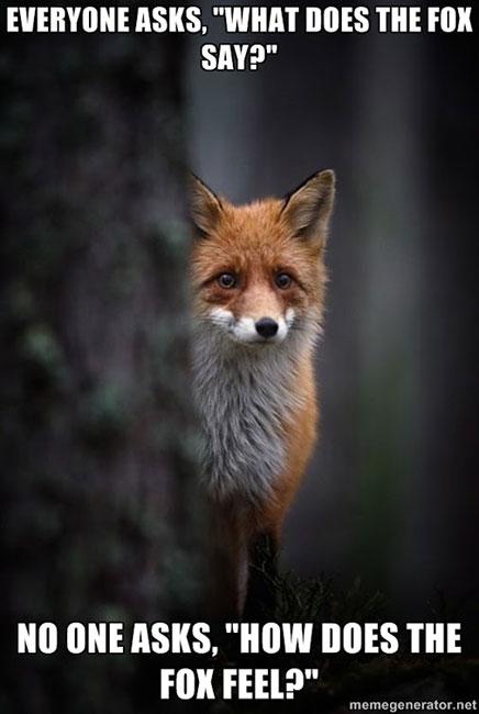 fox-says-fox-feels