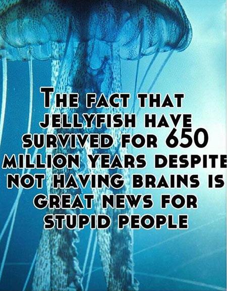 jellyfish-stupid-people