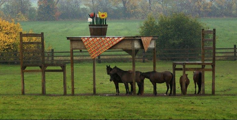 jens-braun-horse-shelter