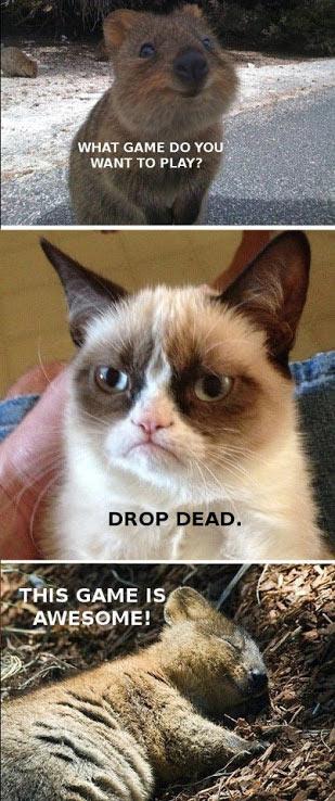 quoka-grumpy-cat