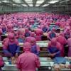 samsara-factory