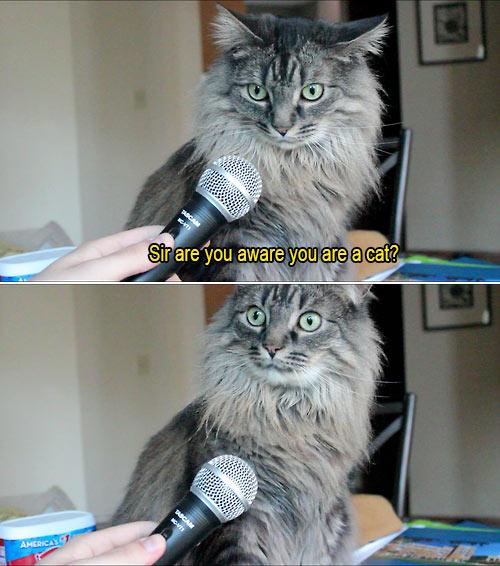 youre-cat